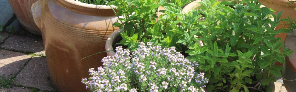 Planting-up-a-Herb-Garden-in-a-container-for-your-patio